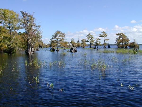Freshwater lake habitat