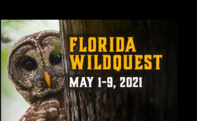 Florida WildQuest. May 1 - 9, 2021