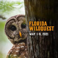 Wild Quest Owl Invitation