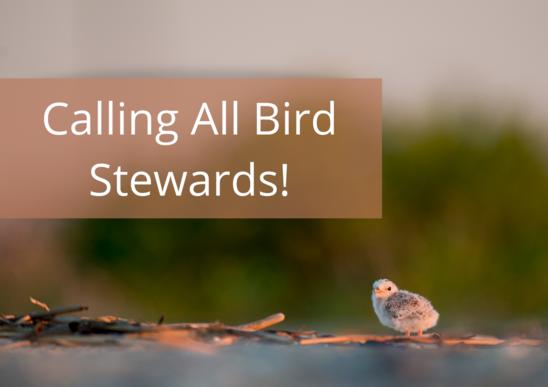Calling all bird stewards