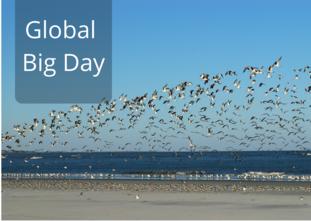2021 Global Big Day