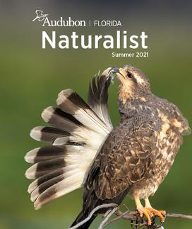 Audubon Florida Naturalist Female Snail Kite Cover Photo