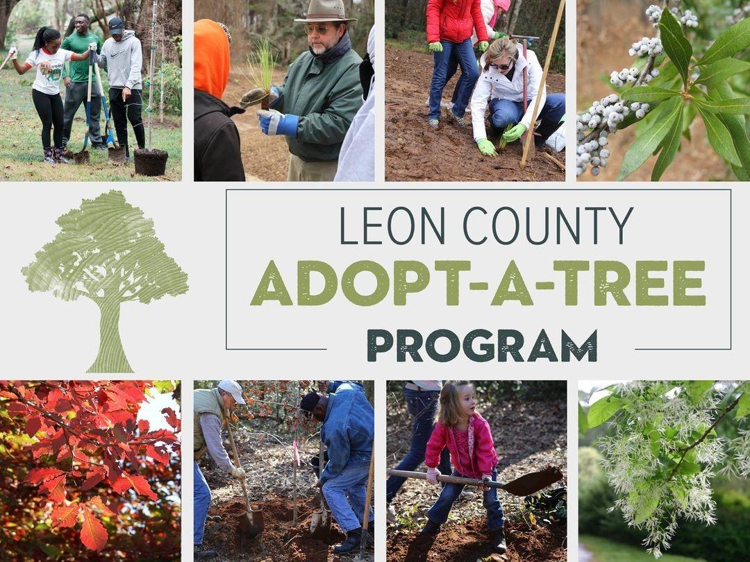 Leon County Adopt A Tree