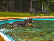 FD Roosevelt dog splash pool