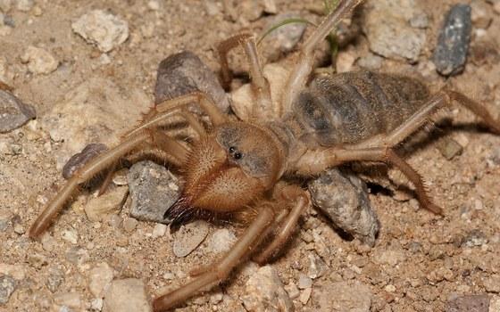 Wind scorpion. Kevin Stohlgren
