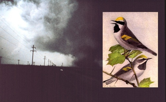 NOAA and bird art image