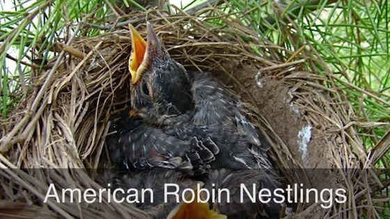 Georgia Wild bird nesting video