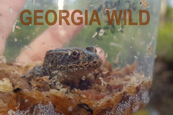 GaWild Masthead: gopher frog