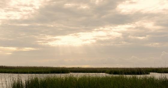 Altamaha delta saltmarsh (Nicole Vidal/USFWS)