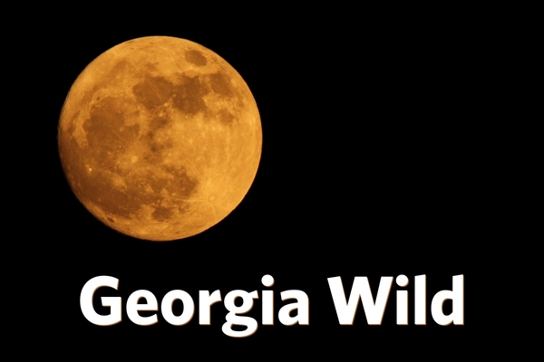 Georgia Wild masthead: supermoon