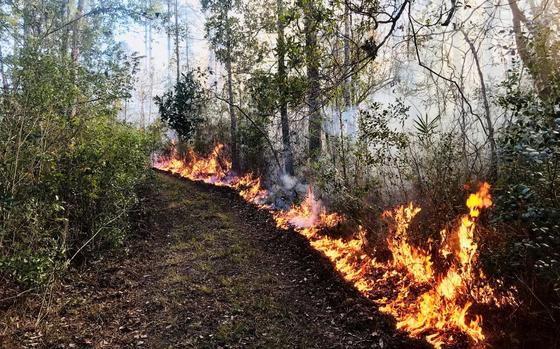 Prescribed fire at Altama Plantation WMA (Garrett Anderson/DNR)
