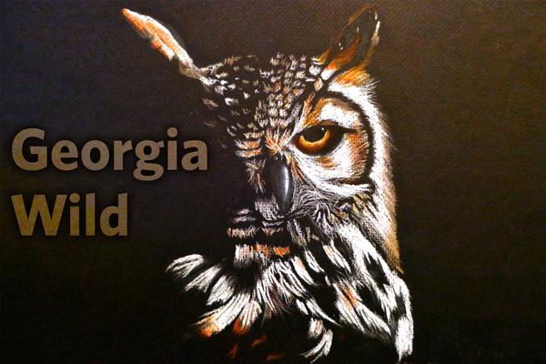 Georgia Wild masthead: winning YBC artwork