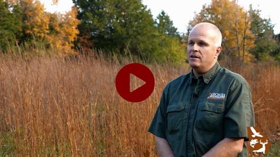 DNR quail habitat video