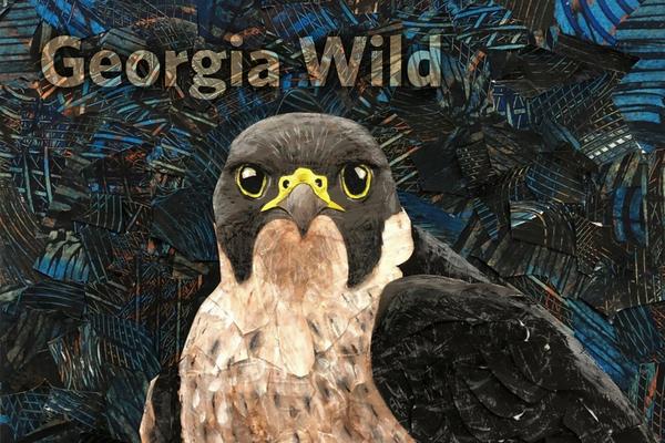 Georgia Wild masthead: peregrine falcon collage