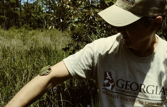 Barking treefrog (Mark Mandica/The Amphibian Foundation)