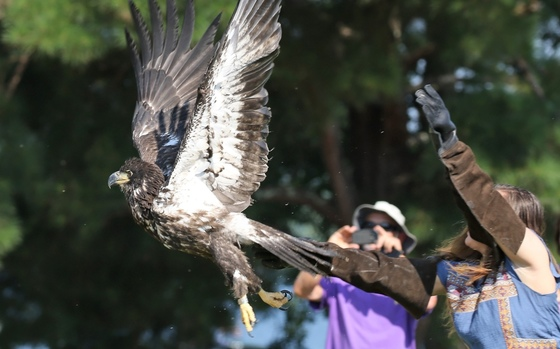 Eagle being released at West Point (Gail Standifer)