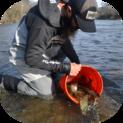 Man releasing trout