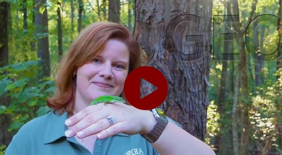 DNR's Linda May and Georgia Wild video on lizards