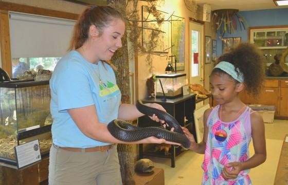 Close encounter with an eastern indigo snake during Keeping Georgia Wild fest
