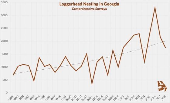 Loggerhead sea turtle nesting chart