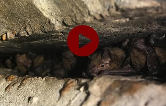 Bats under bridge (DNR)