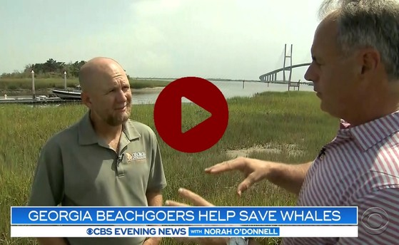 DNR's Clay George talks with media about the mass stranding (CBS News)
