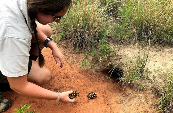 Fish and Wildlife's Jessica Radich releases head-started tortoises at Lanahassee (Ashley Bohle/WALB-TV)