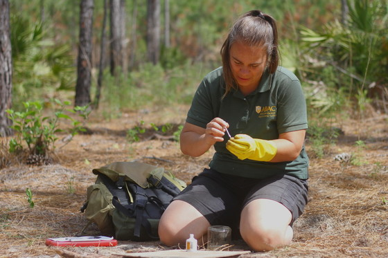 ABAC's Dr. Vanessa Lane marks a beetle trapped at Alapaha River WMA. (Josiah Lavender/DNR)
