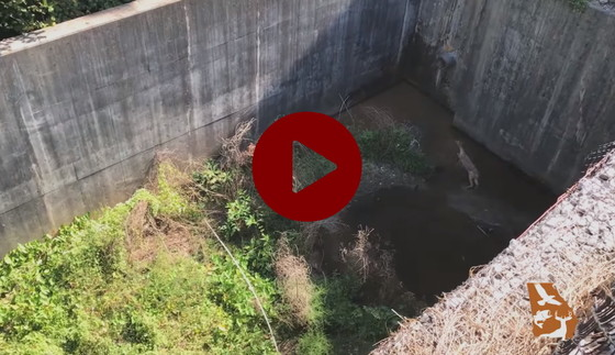 DNR videoed rescue of deer in retention basin