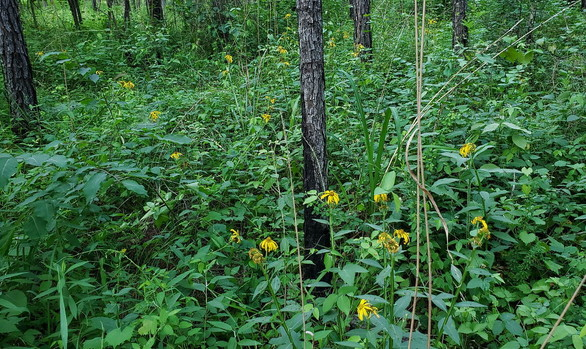 The plants at Piedmont NWR (Joyce Klaus)