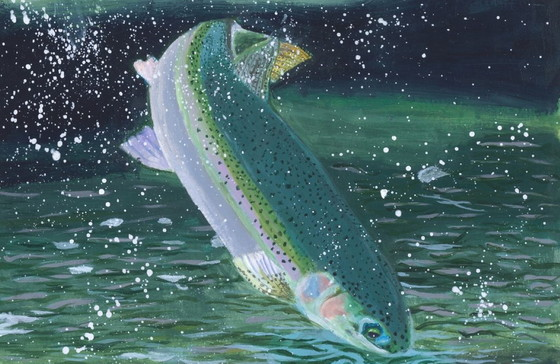 Steelhead trout by Kelly Zhong, first in 2020 Fish Migration category