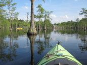 Kayaking George L. Smith State Park