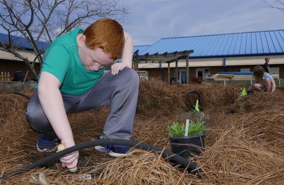 A third-grader plants for pollinators at Portal Elementary (Linda May/DNR)