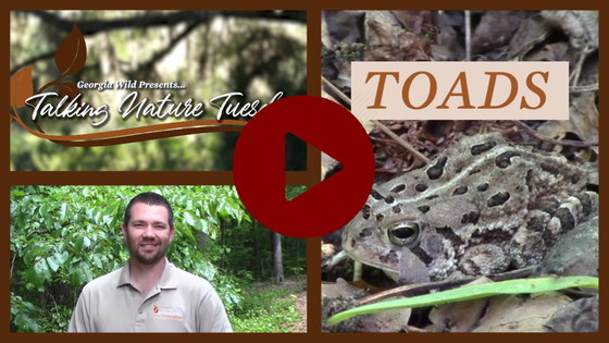 Talking Nature Tuesday episode on toads