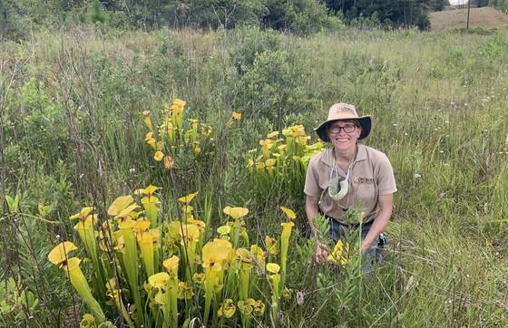 DNR botanist Lisa Kruse beside yellow flytrap pitcherplants at the south Georgia bog (Carlee Steppe/DNR)