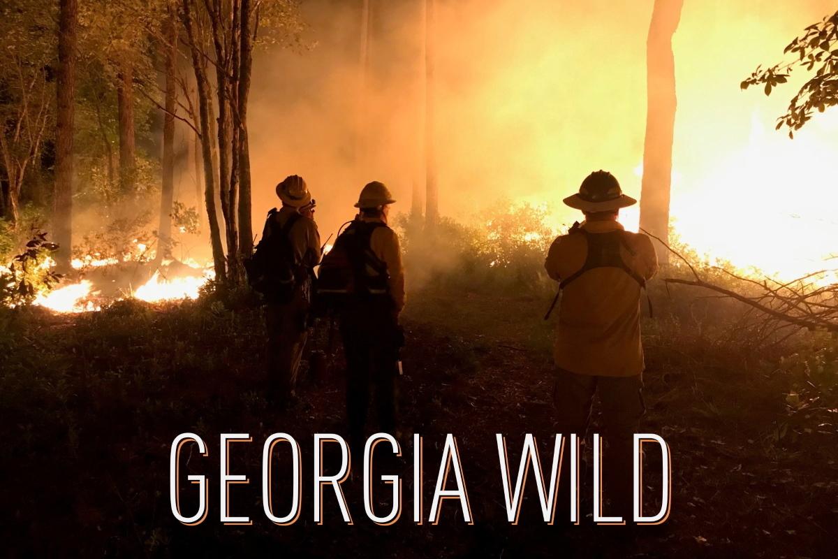 Georgia Wild masthead: prescribed fire at night