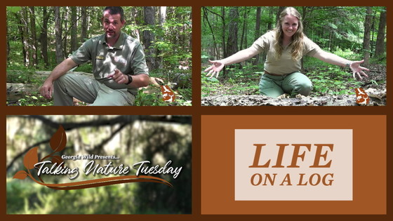 Talking Nature Tuesday: life on a log