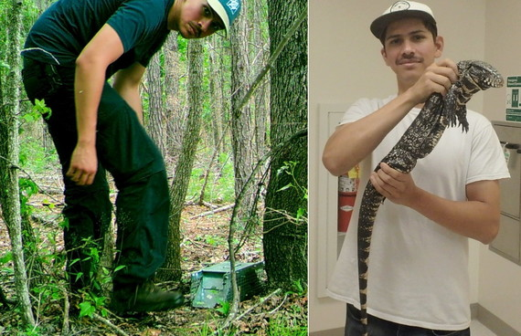USGS student contractor Danny Haro shows a trap and a captured tegu (left/USGS; right/Georgia Southern)
