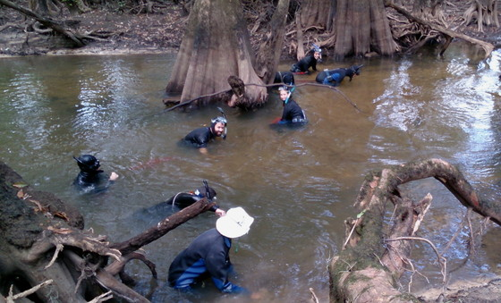 Surveying for mussels in a south Georgia creek (DNR)