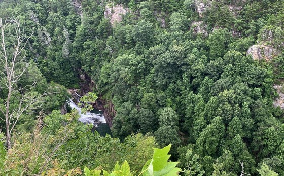 Survey finds surviving Tallulah Gorge hemlocks responding to woolly adelgid treatment (Carlee Steppe/DNR)