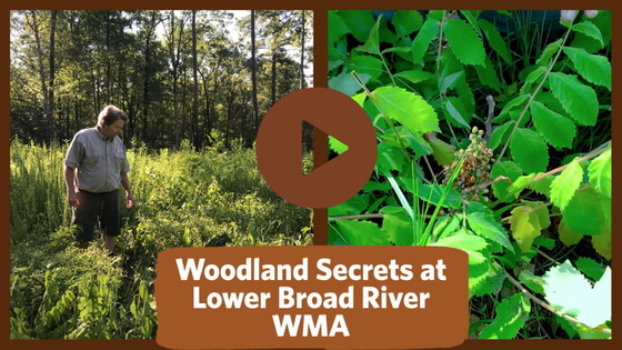 Sumac video from Lower Broad River WMA