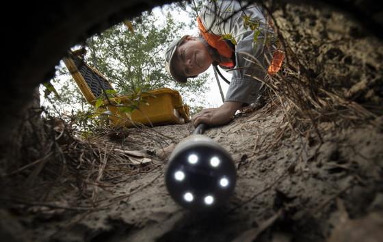 DNR gopher tortoise crew scoping a burrow at Ceylon WMA (Mac Stone)