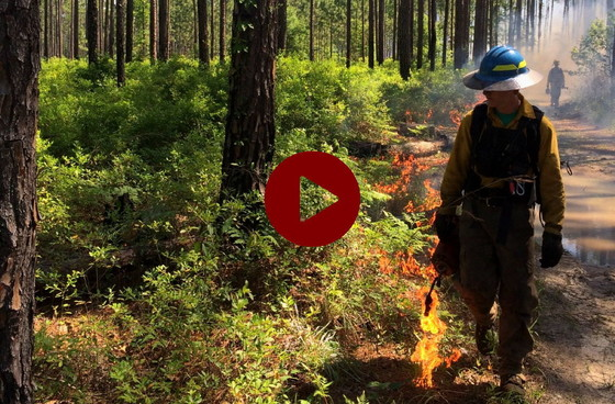 Slideshow of restoring sites with prescribed fire