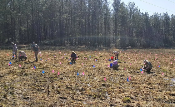 Planting at Ohoopee Dunes WMA