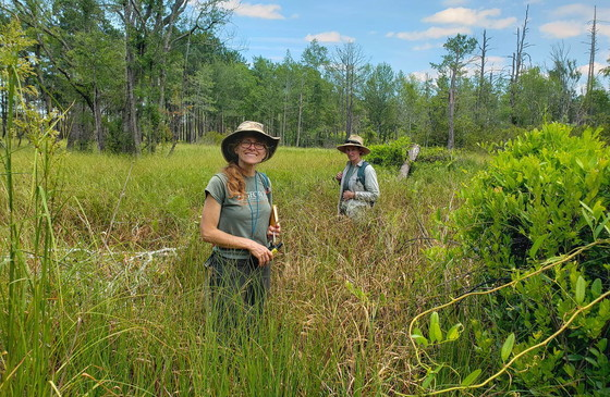 DNR's Lisa Kruse and Stephanie Koontz assess pondberry at Sandhills WMA. (Nathan Klaus/DNR)