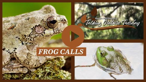 Talking Nature Tuesday: Summer Frog Calls