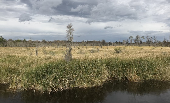 A birding-tower view of the J.F. Gregory Park wetland (Beth Quillian/DNR)