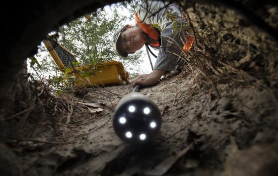 DNR gopher tortoise crew scopes a burrow at Ceylon WMA (Mac Stone)