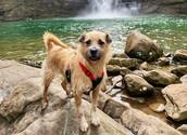 dog at cloudland canyon