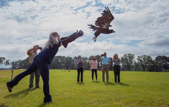 Southeastern Raptor Center volunteer Valerie Castanza releases a young bald eagle at West Point Lake. (Auburn University)